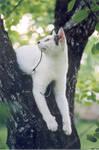 Cat in tree 2