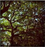 Oak Friends