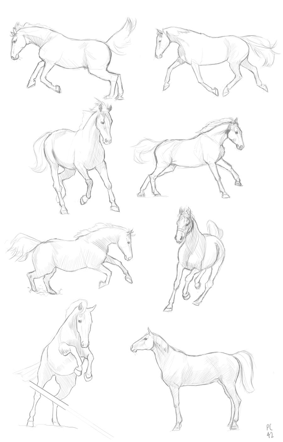 Horse Anatomy and Proportion Sketches by PonyCool42 on DeviantArt