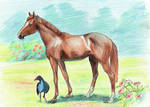 Clementine (foal ref)