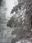 Snow 3 18