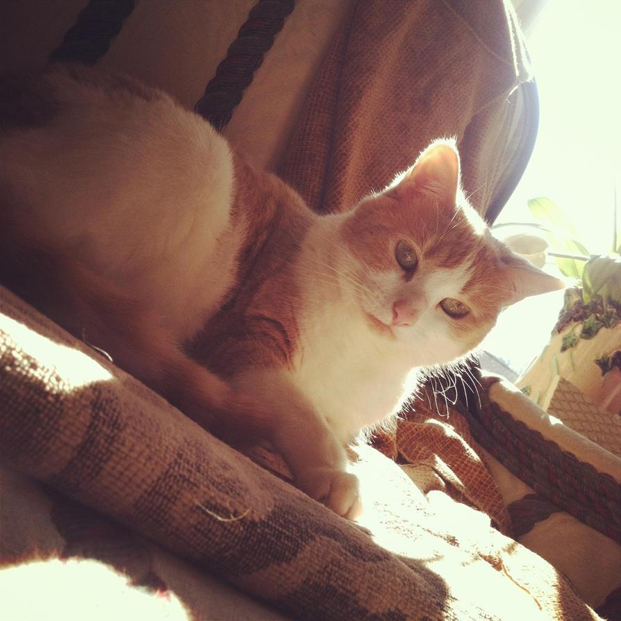 Feline by jessiepie