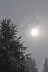 Sunny Snowing