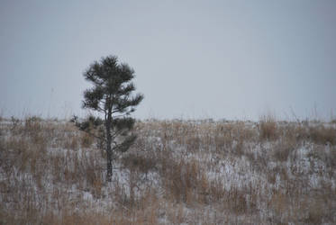 Cold and Lonely Tree