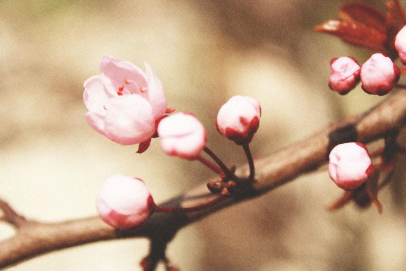 http://fc00.deviantart.net/fs71/f/2012/114/b/2/flower_by_lexandra13-d4xfez3.jpg