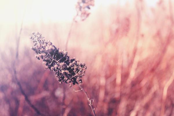 http://fc03.deviantart.net/fs71/i/2012/176/e/1/soft_by_lexandra13-d54tcct.jpg
