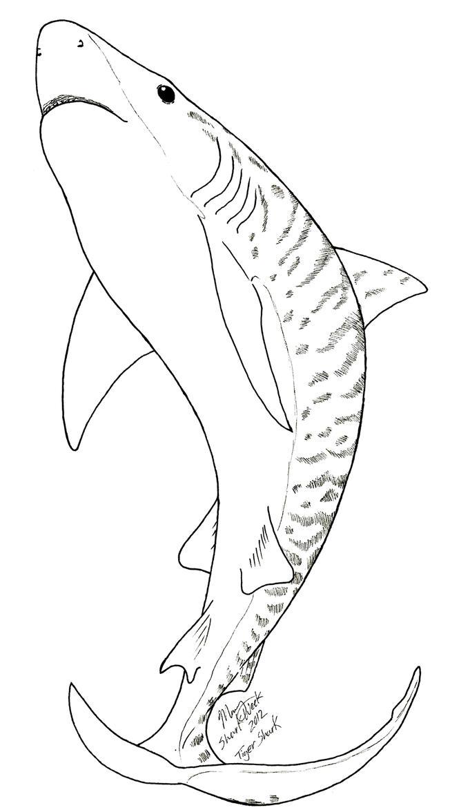 mako shark coloring page - mako shark pencil coloring pages