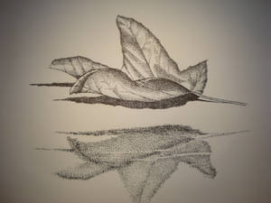 Reflections of a Leaf