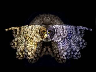 Three Owls by themasterofnone