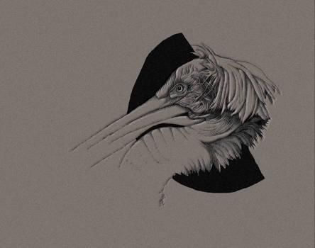 The Pelican Stare