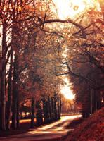 November Sun by Peterix