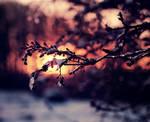 Snow and December Sun