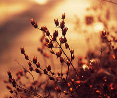 Winter Gold by Peterix