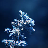 A Study in Blue III by Peterix