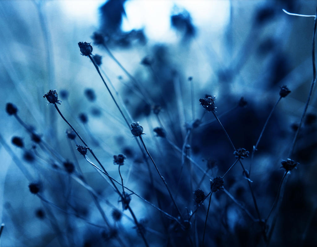 A Study in Blue V by Peterix