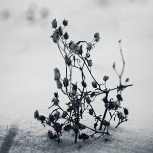 The white season