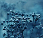 Lost in blue, all silvered over with white