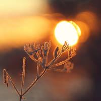 In the Winter Garden by Peterix