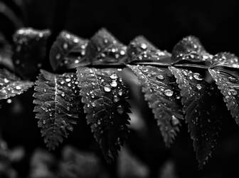After the rain, the tears are visible again