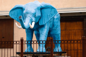 The Blue Elephant by CarlMillerPhotos