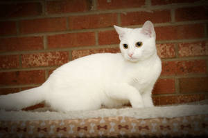 White Panther - Very Rare by CarlMillerPhotos