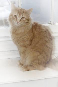 Fuzzy Ginger