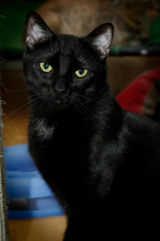 Princeton Panther by CarlMillerPhotos