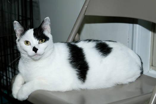 Chairman Cat