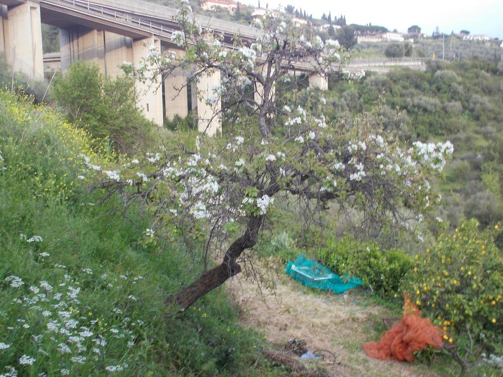 My pear tree by gekkodimoria