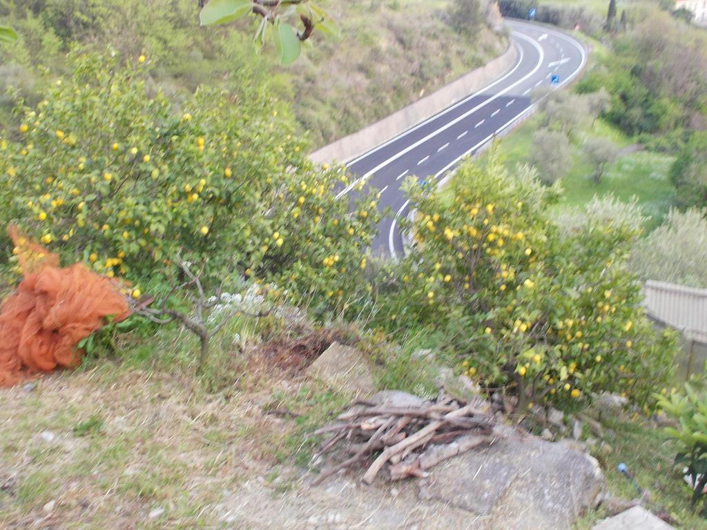 My lemon trees by gekkodimoria