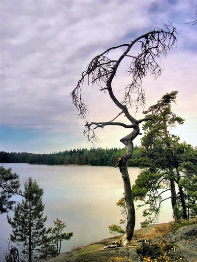 Kalevala tree by Pajunen