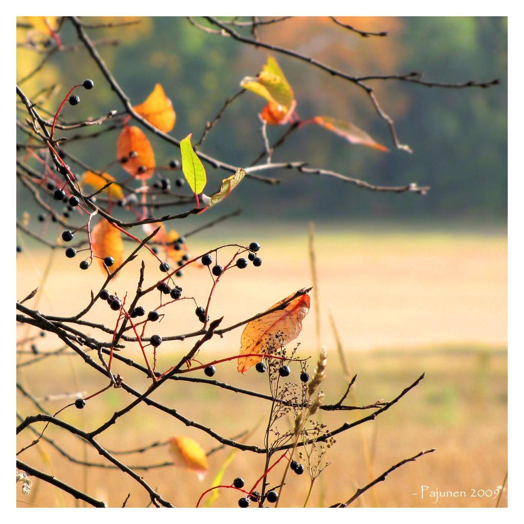 My Autumn by Pajunen