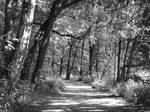 Path to Seurasaari