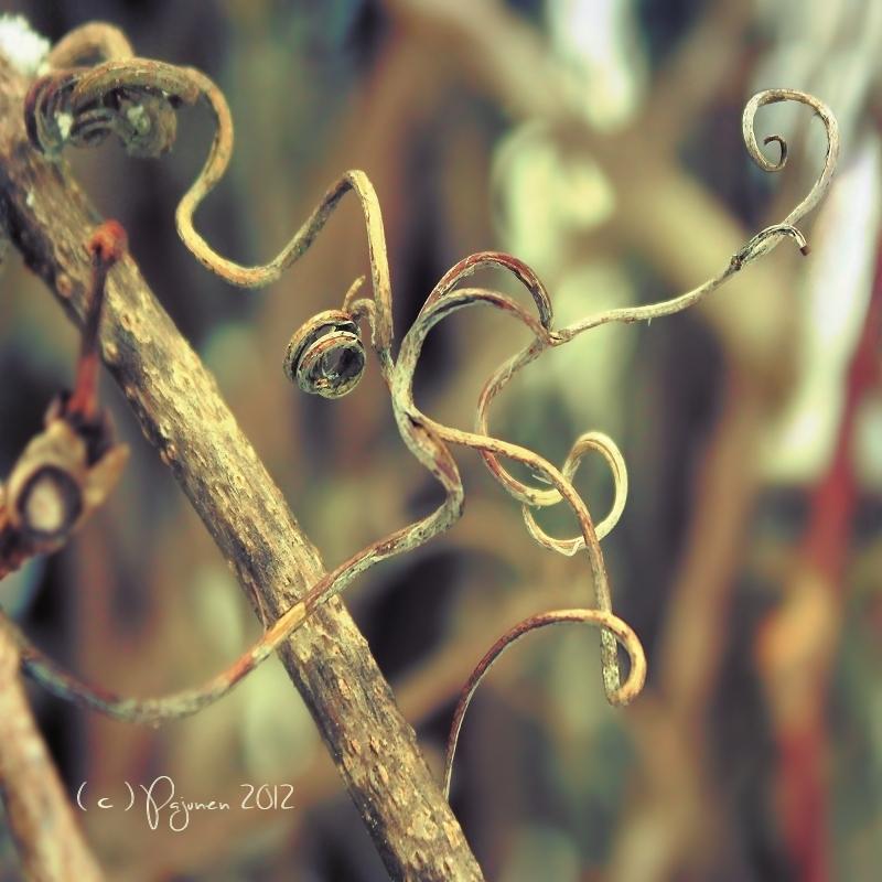 Curls by Pajunen