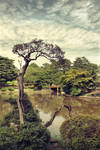 Old Japanese tree by Pajunen