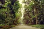 On the road to Meiji Shrine
