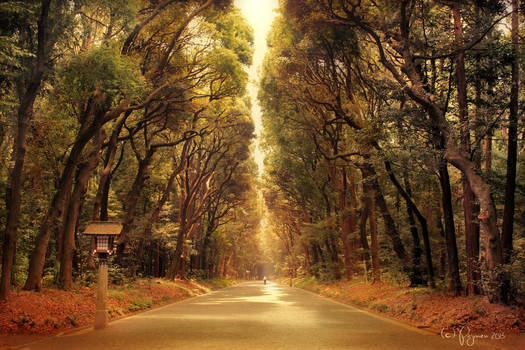 The road to Meiji Shrine
