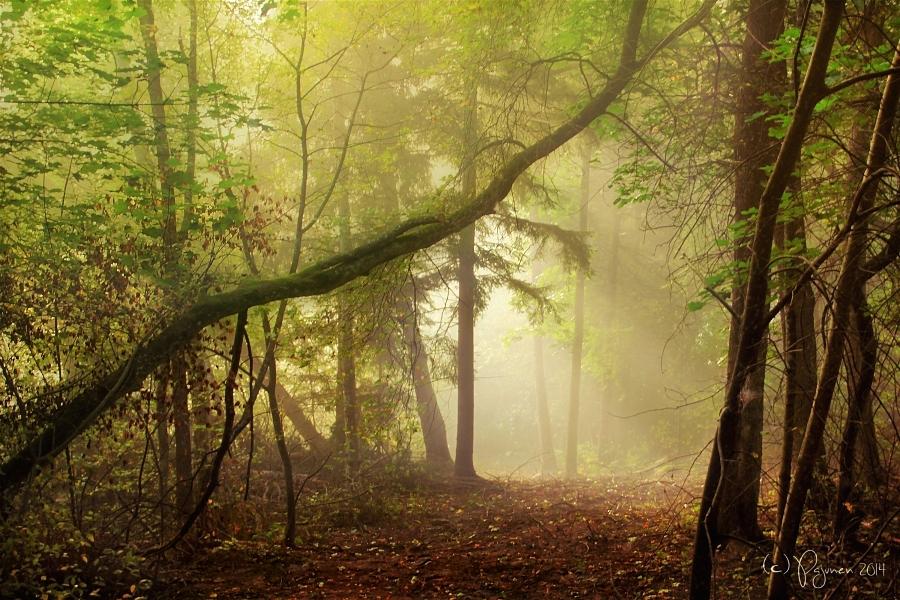 Misty autumn morning by Pajunen