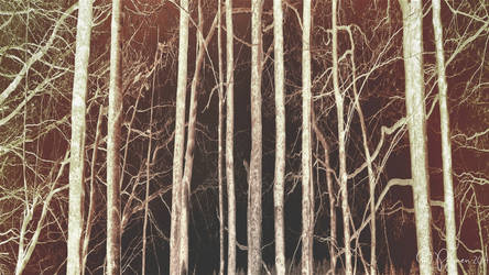 Pale trees by Pajunen