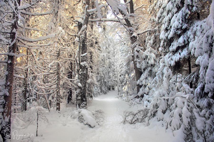 Snow World by Pajunen