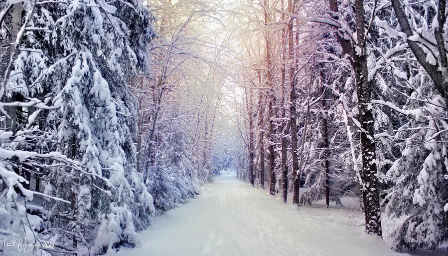 Winter Road by Pajunen