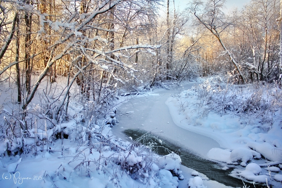 Winter Brook by Pajunen