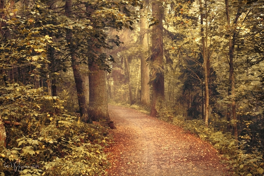 Last Autumn by Pajunen