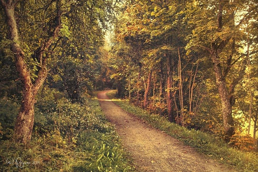 The path we once walked