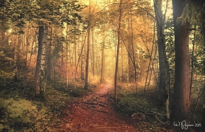 Forest Path by Pajunen