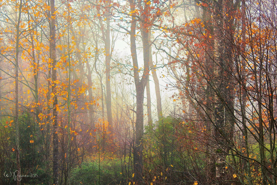 Autumnal Trees by Pajunen