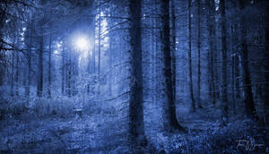 Return to the blue forest by Pajunen