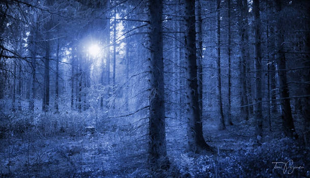 Return to the blue forest
