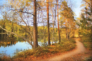 Trees by the forest lake by Pajunen