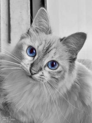 Cat Of The Day by Pajunen